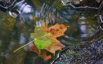 Leaf in water...playing around in the rain.